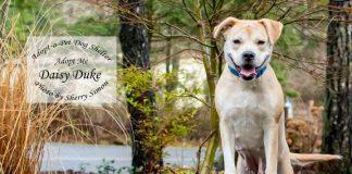 Adopt a pet Dog of the Week Daisy Duke