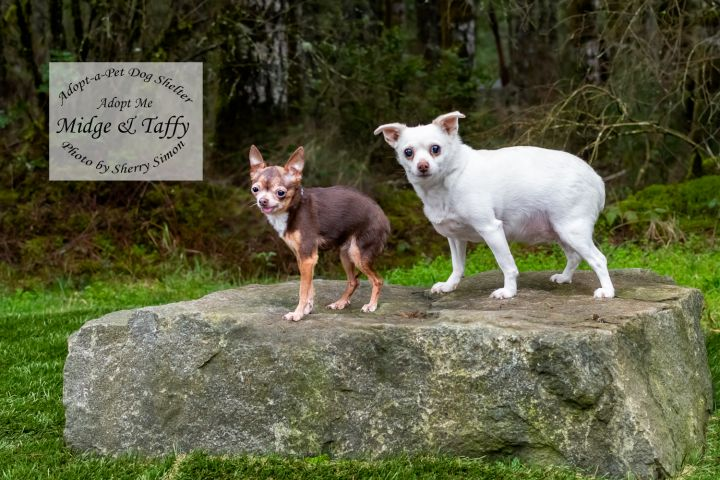 Adopt a pet Dogs of the Week Taffy and Midge