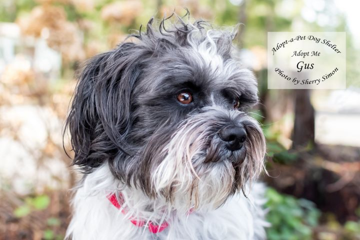 Adopt A Pet Dog of the Week Gus
