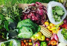 Sky-Island-Farm-Weekly-CSA-Delivery