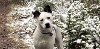 adopt a pet dog of the week Dolly Parton