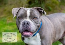 adopt a pet Dog of the Week Luna Butterball