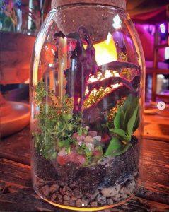 lily lane flower farm terrarium