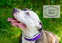 Adopt a pet dog of the week Moon
