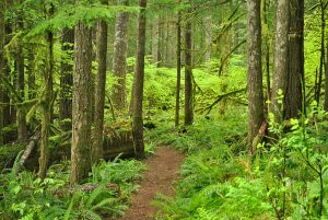 Tom-Brosman-green-forest-trail