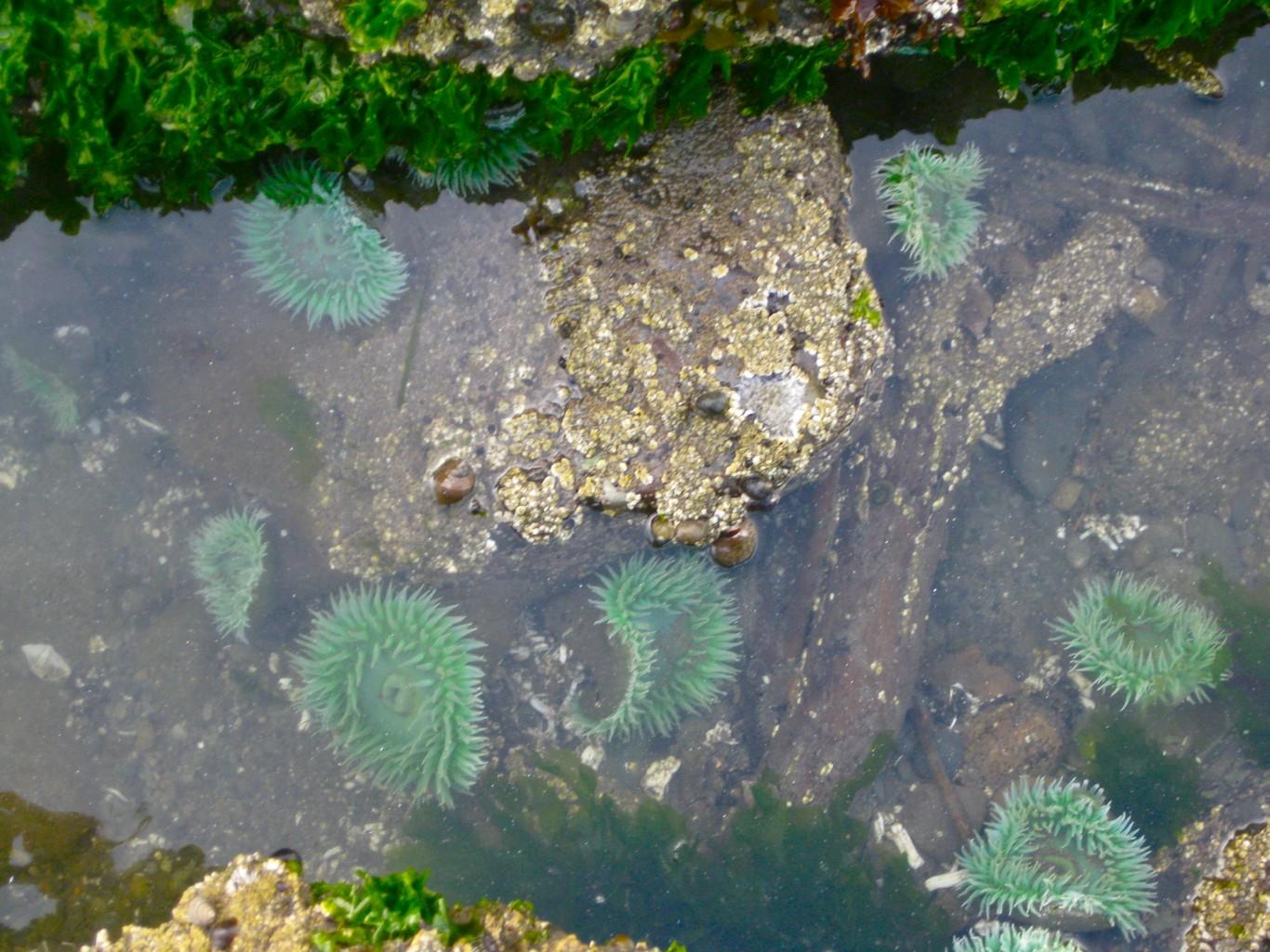 Tide Pools Beach Kalaloch 4