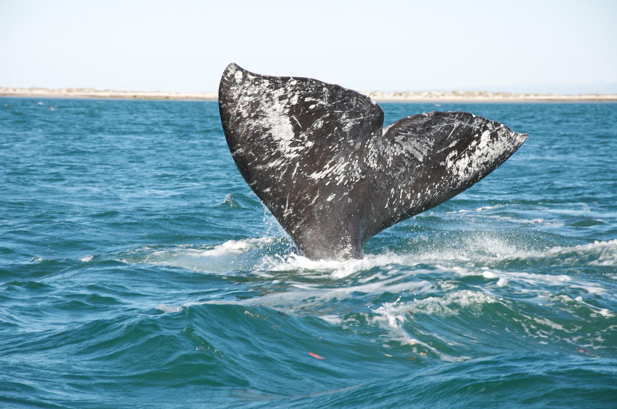 Northwest Credit Union >> Spring Whale Watching Along the Washington Coast ...