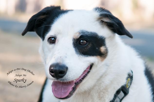 Adopt A Pet Dog of the Week