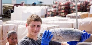 Westport Marina Albacore Loading blast frozen fish at Westport Seafood, Inc