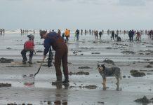 Razor Clam Digging Washington Coast