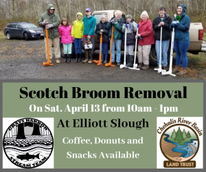 Elliott Slough Scotch Broom Removal @ Elliott Slough