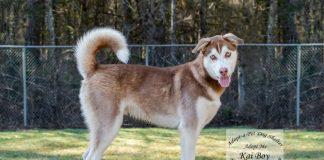 Adopt a Pet Dog of the Week Kai Boy