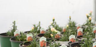 garden starts nursery
