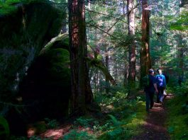 Camping in McCleary South Fork Skokomish via The Outdoor Society