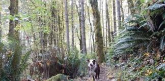 Where to walk your dog in Elma dog walking in capotal state forest
