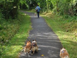 Where to walk your dog in Montesano trail at friends landing