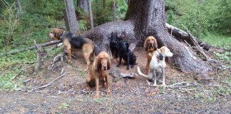 where to walk your dog in Aberdeen six dogs on johns river trail by tree