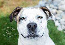 Adopt A Pet Dog of the Week Emma