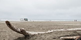 Where to camp in Grays Harbor Washington Beach Access at Ocean City State Park