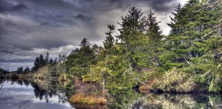 Where to camp in Grays Harbor Washington Ocean City State Park