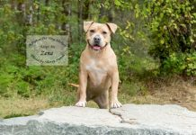 Adopt A Pet Dog of the Week Zena