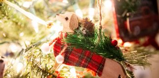 Olympia Pet Emergency Holiday Pet Safety Tips Pet Tree