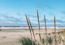 instgram spots ocean shores beach-grass