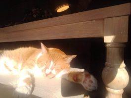 NW-Remedies-Pet Pharmacy-Oliver-sleeping