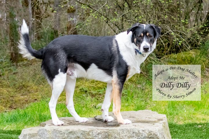 adopt a pet dog of the week Dilly Dilly