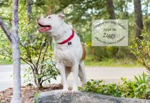 adopt a pet dog of the week Ziggy