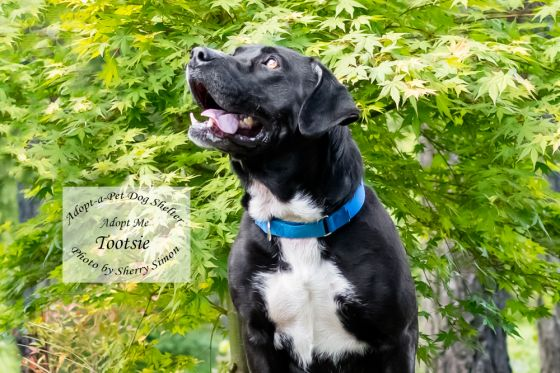 adopt a pet Dog of the Week Tootsie