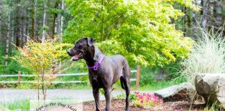 Adopt a pet dog of the week shelton