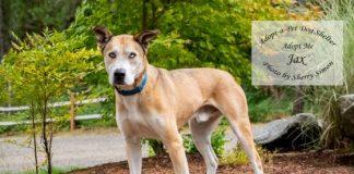 adopt a pet dog of the week Jax