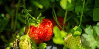 harbor regional health-Fruit-and-Veggie-Rx-prescription