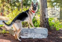 adopt a pet dog of the week Maggie