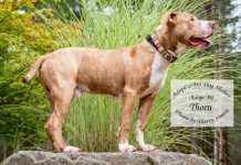 Adopt a pet dog of the week Thorn