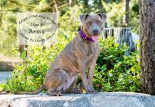 adopt a pet dog of the week Bonnie
